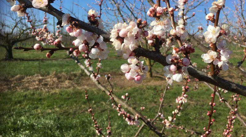 Puy-Leonard Spring