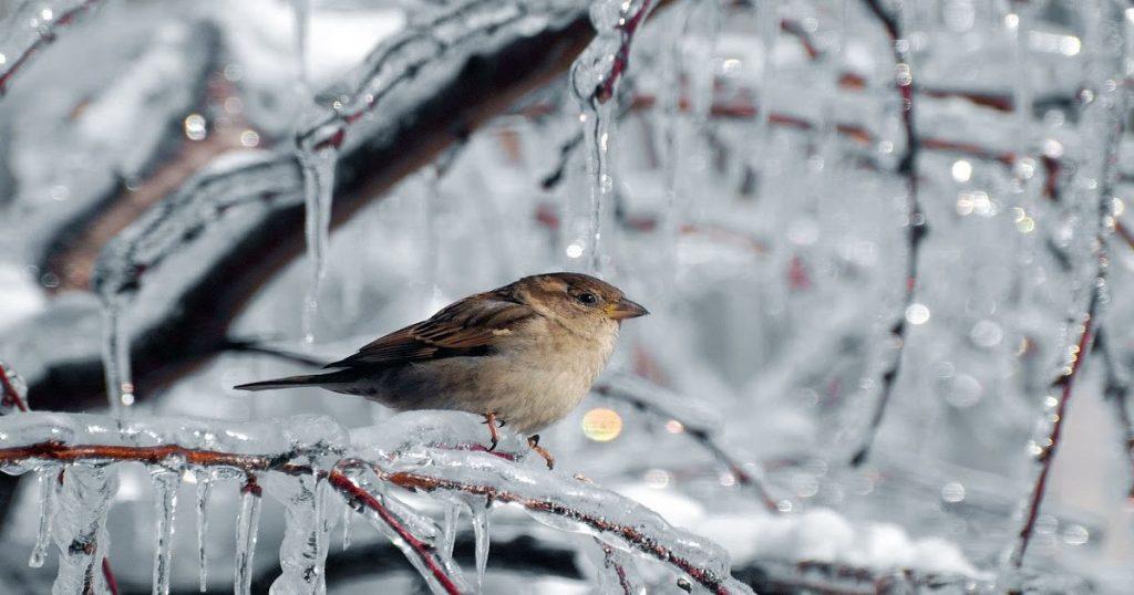 Puy-Leonard Bird Winter