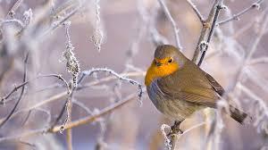 Puy-Leonard Bird Winter 2
