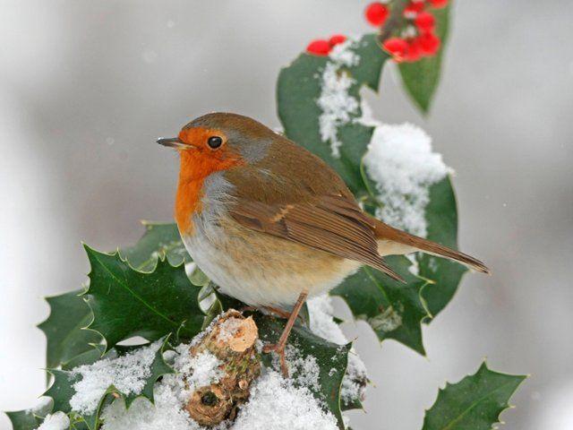 Puy-Leonard Bird Winter 3