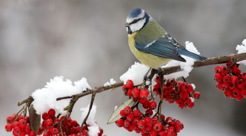 Puy-Leonard Birds Winter