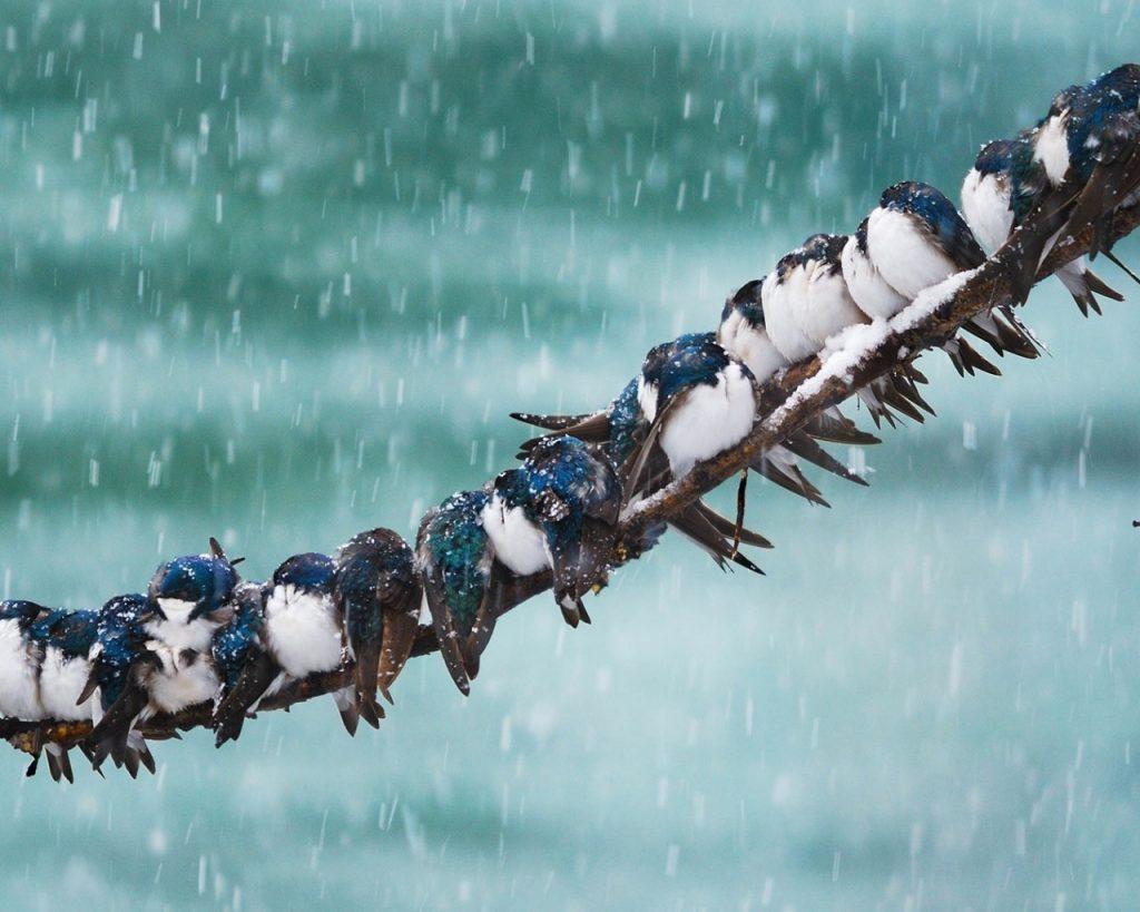Puy-Leonard Birds-snow-winter-tree-branch