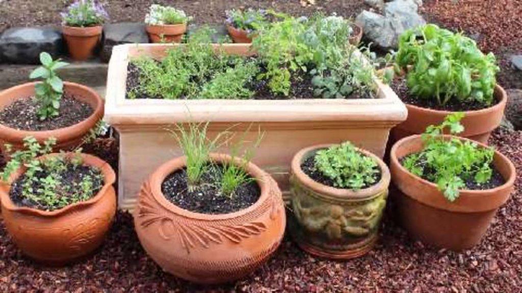 Puy-Leonard Herb Garden