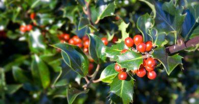 Puy-Leonard Holly December