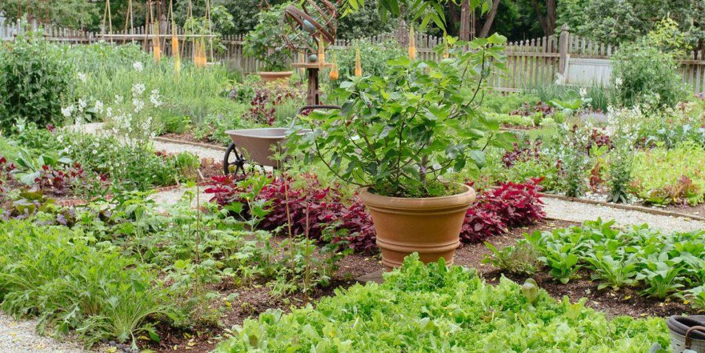 Puy-Leonard Vegetable Garden