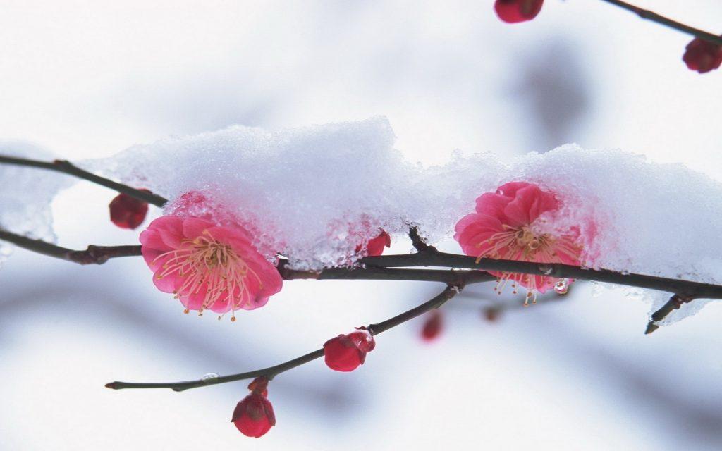 Puy-Leonard Winter Flower January